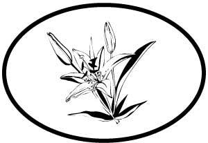 Lilies decal from Oval Envy.  Great price for a durable vinyl decal.  We've got animals, beaches, dogs, cats and more!  Search our catalog for your next Euro Oval Decal.