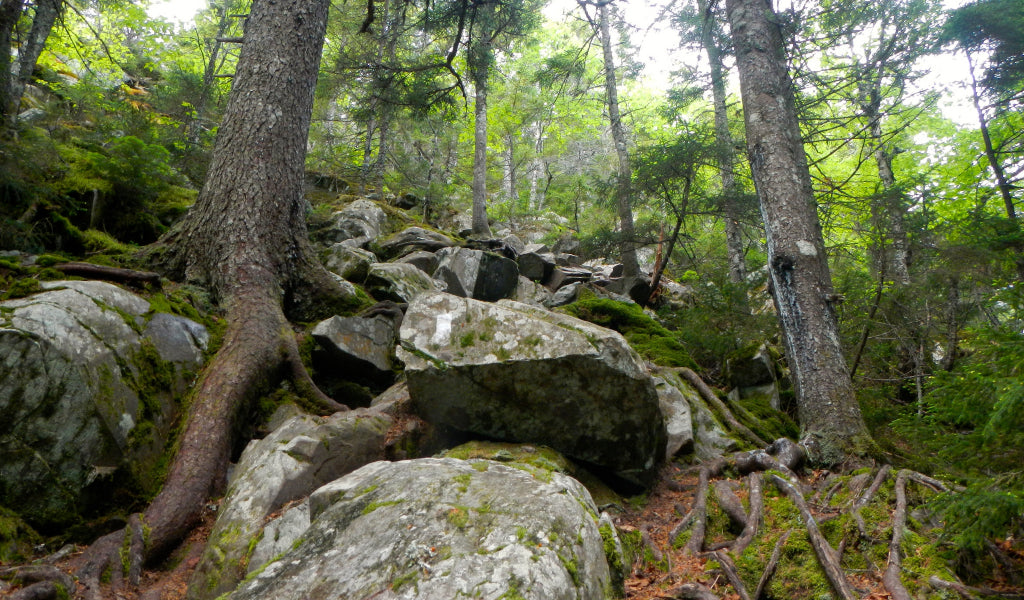 100 mile wilderness maine best appalachian trail section hikes