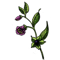 the deadly nightshade is a poisonous plant