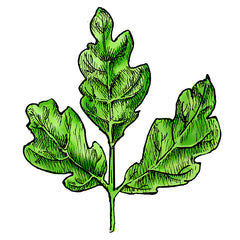 poison oak is a poisonous plant