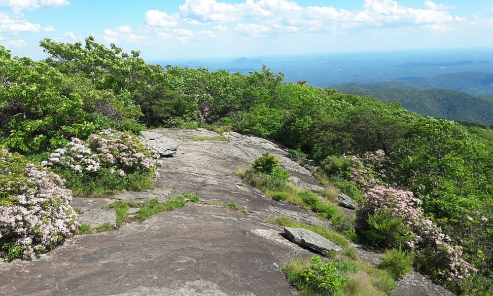 blood mountain georgia - best appalachian trail section hikes