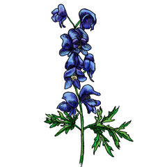 monkshood is a poisonous plant