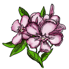 oleander is a poisonous plant