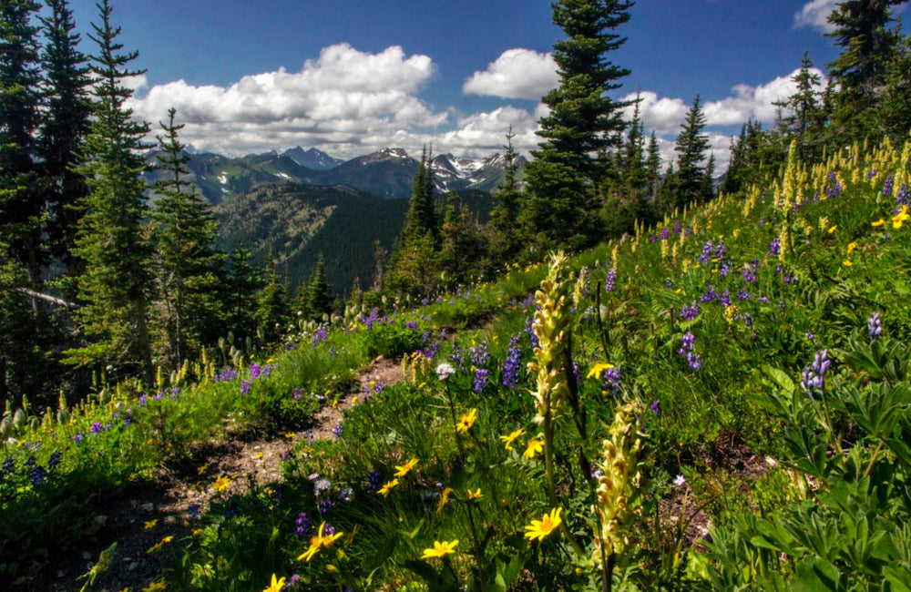 pacific crest trail section washington