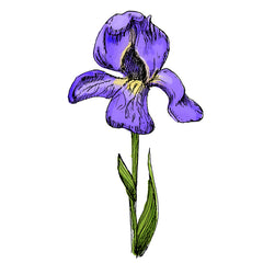 the iris is a poisonous plant