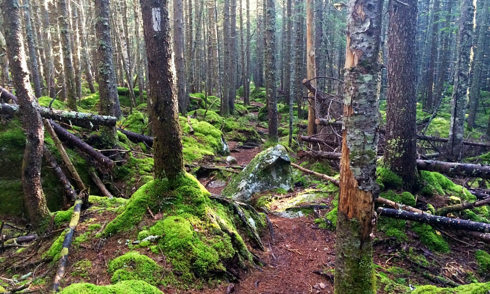 100 mile wilderness maine - best appalachian trail section hikes