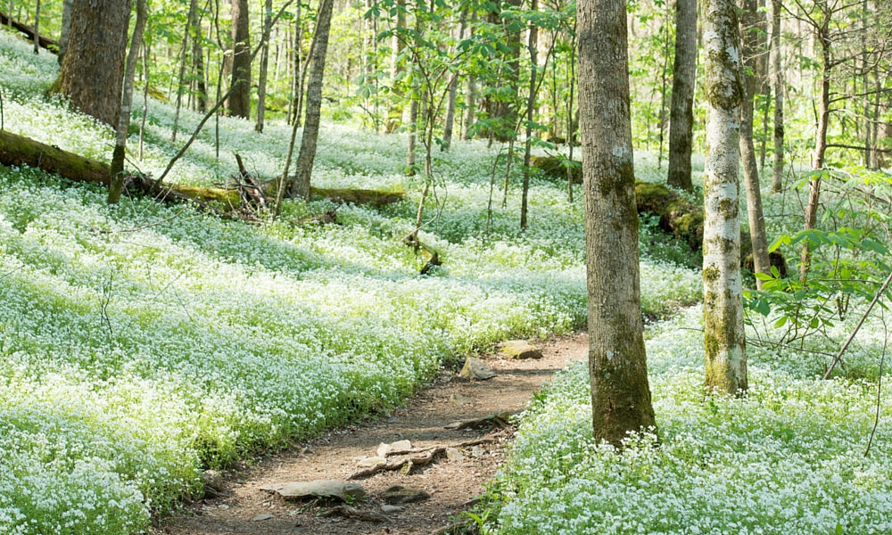 vermont - best appalachian trail section hikes