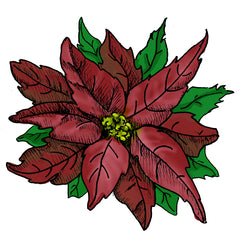wild Poinsettia is a poisonous plant