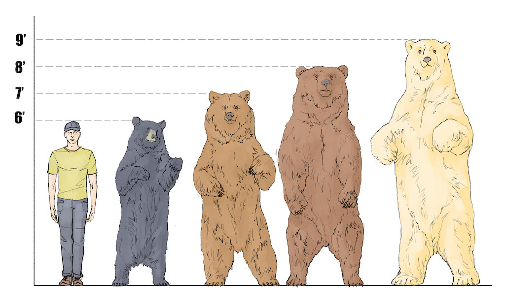north american bear types and size