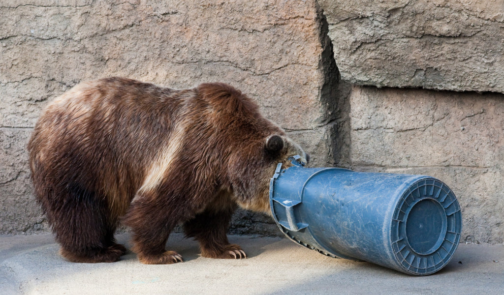best bear canisters and bear resistant containers