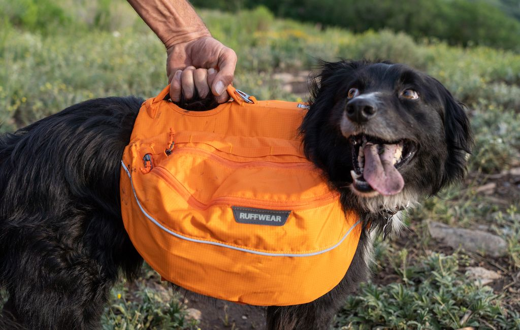 Hiker holding his dog using the handle on his dog backpack