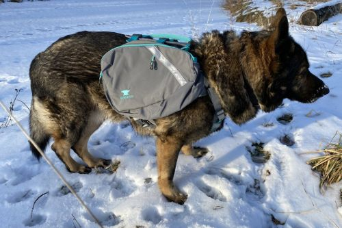 best dog backpacks for hiking