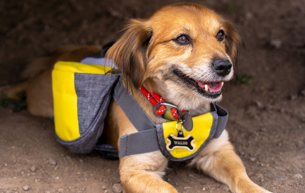 dog with a backpack laying down