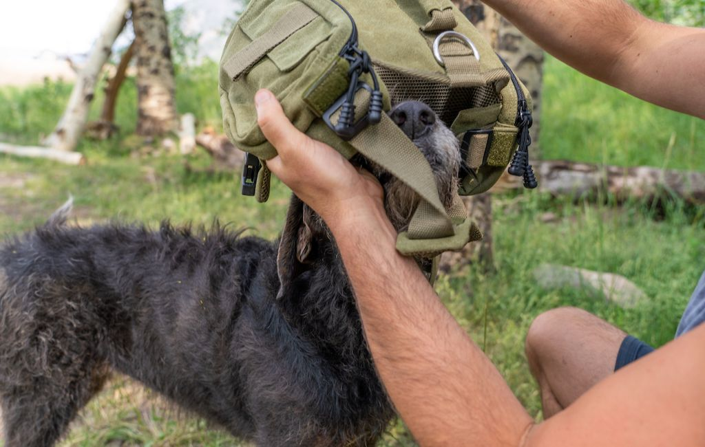 fitting a dog backpack
