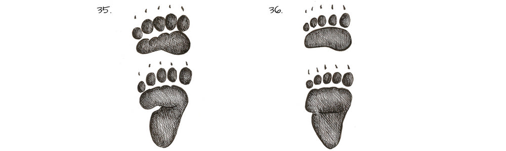i black bear grizzly bear track prints