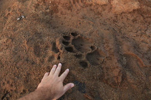 How to Identify Animal Tracks