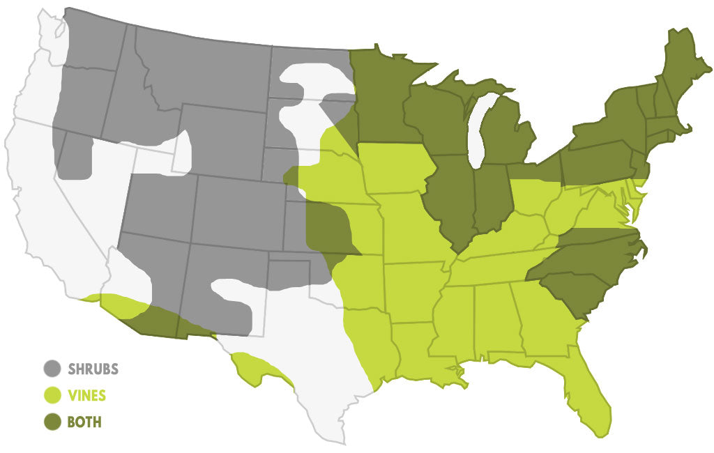 Where does poison ivy grow - poison ivy map