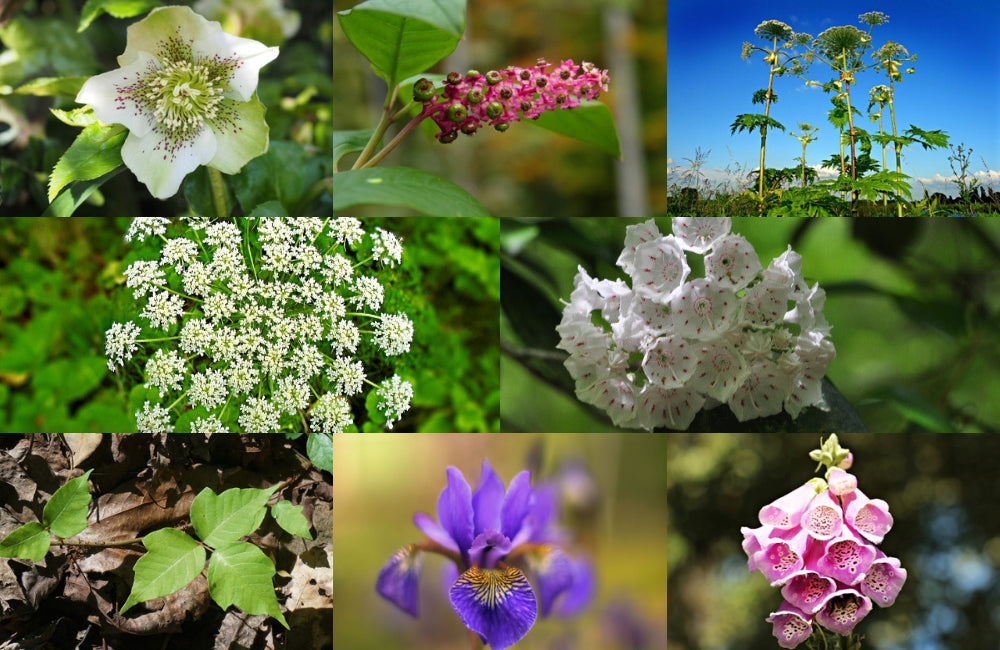 how to identify poisonous plants