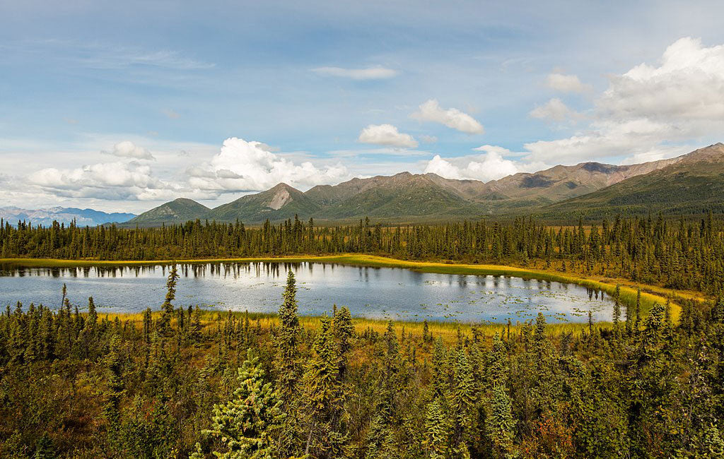tetlin refuge national park vs national forest