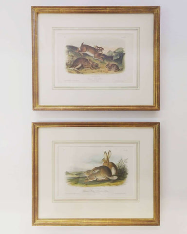 Antique prints with exquisite French Matting and custom gold leaf frames