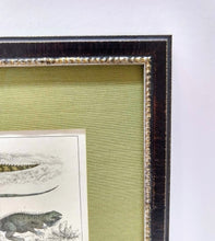 Load image into Gallery viewer, Framed Lizard Print