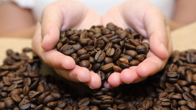 The Relationship of Flavor and the Roasting of Coffee Beans