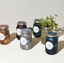 Load image into Gallery viewer, Basil Hydroponic Garden Jar