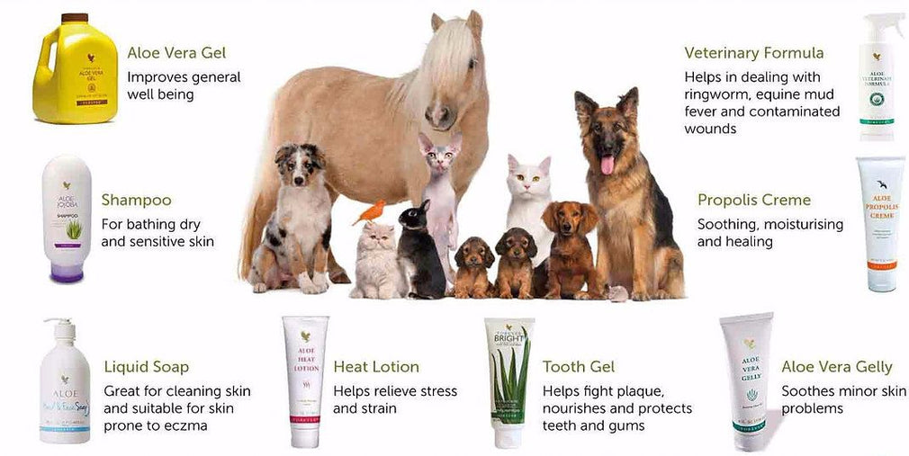 Horse - Forever Living Pets