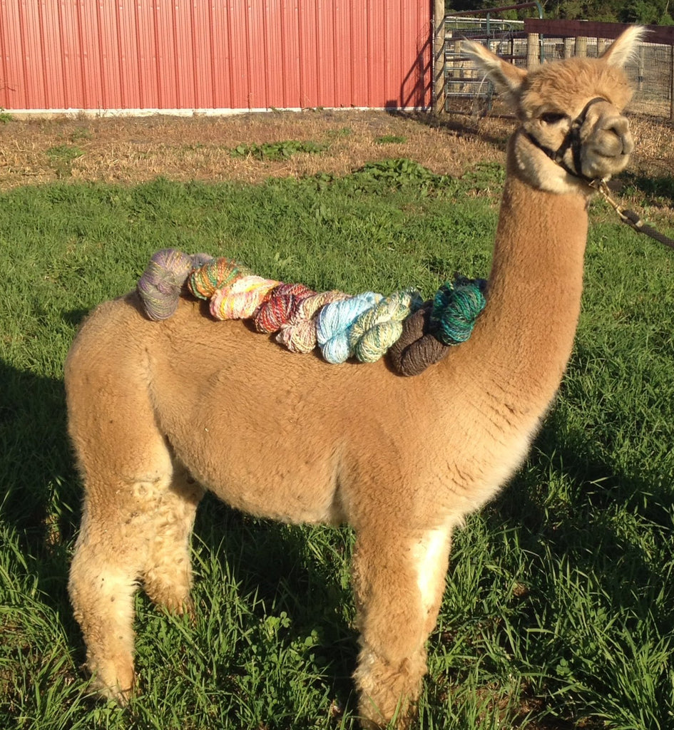 Virtual Adoption - Adopt-a-paca™ - SEBASTIAN (Superfine Fiber)  - Medium Fawn