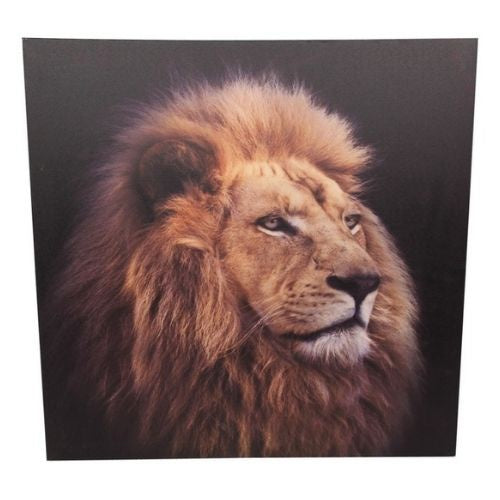 Lion Canvas Print - 50cm