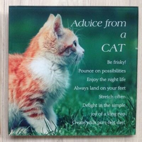 Advice from a Cat Plaque