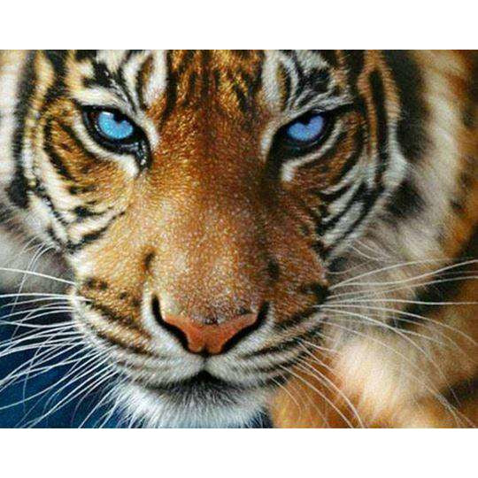 Diamond Art Picture Half Drill Size 30X30 Blue Eyed Tiger