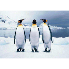 Diamond Art Picture Full Drill Size 35X45 Happy Feet