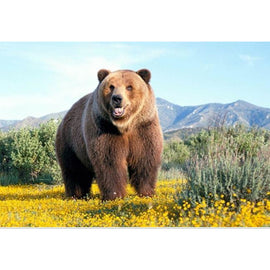 Diamond Art Picture Half Drill Size 30X40 Brown Bear