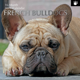 PP French Bulldog