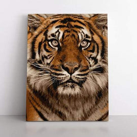 PaintbyNumber-40x50cm  tiger love