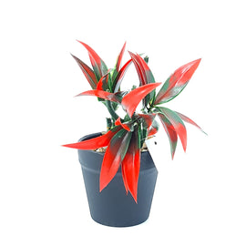 Artificial Plant- Red Style 27 15cm