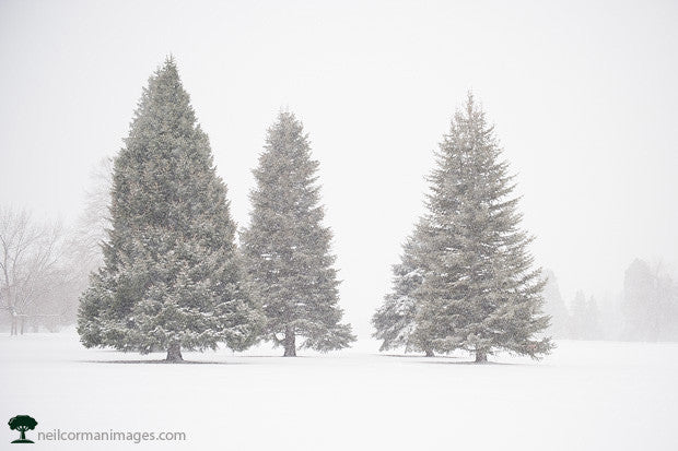 Trees at Cheesman Park During the Winter