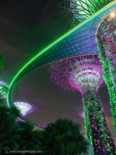 Evening at Gardens by the Bay