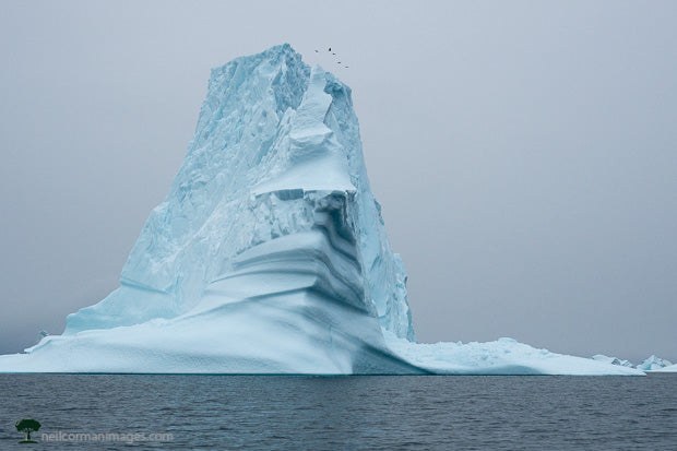 Iceberg and Birds