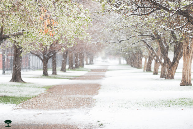 Snowy Path to City Park in Denver Colorado