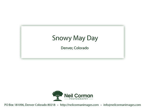 Snowy May Day<br />Thank You Cards