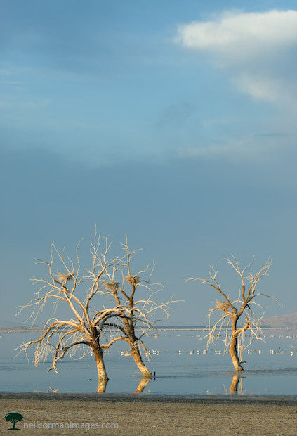 Salton Sea Morning