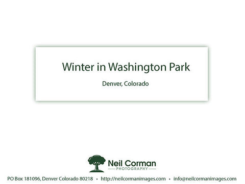 Winter in Washington Park<br />Thank You Cards