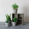 Assorted Faux Succulents In Wooden Crate