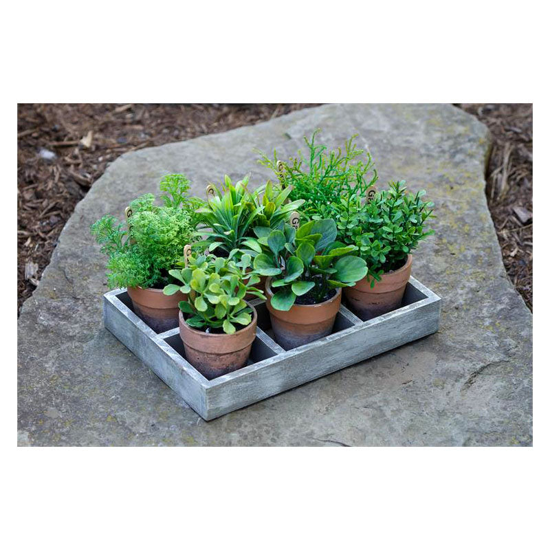 Assorted Herbs In Wooden Tray 8F5853