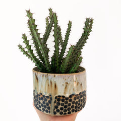 'UNIVERSE RAW' PLANTER - LARGE