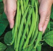 Load image into Gallery viewer, Provider (Bush Beans)