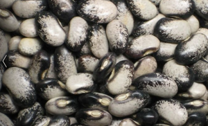 Black Nightfall (Beans)