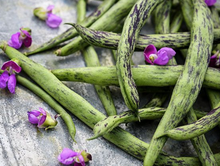 Load image into Gallery viewer, Rattlesnake (Pole Beans)